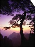Huangshan Pine in the Huangshan Mountains