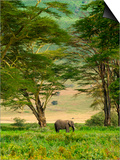 African Elephant in Ngorongoro Crater in Ngorongoro Conservation Area