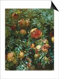 Pomegranates  Majorca