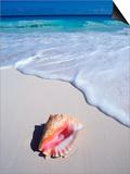 Mexico  Yucatan Peninsula  Carribean Beach at Cancun  Conch Shell on Sand