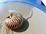 Seashell Resting on Shore