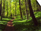 Path in beech forest