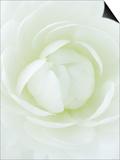 White Petals of Flower