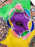 Close-up of a Painted Elephant  Elephant Festival  Jaipur  Rajasthan  India