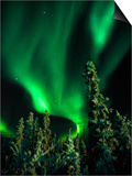 Aurora Borealis or Northern Lights  Yukon