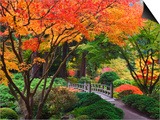 Fall colors at Portland Japanese Gardens  Portland Oregon