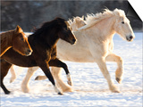 Draft Horse Running With Quarter Horses in Snow