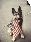 Dog Holding American Flag in Mouth