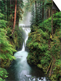 Sol Duc Falls Cascading Through Rainforest