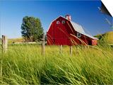 Red Barn in Long Grass