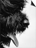 Furry Dog Panting