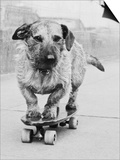 Dog Riding Skateboard