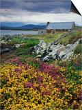 Flowers Along Carna Bay