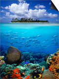 Underwater Scene in the Tropics