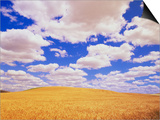 White Clouds Over Wheat Field