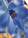 Blooming Delphinium
