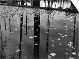 Leaves in Pond  1956