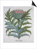 Cineracum Flore