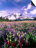 Wildflowers in Mt Rainier National Park