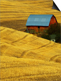 Barn and Golden Wheat Field