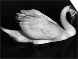 Swan  Europe  1972