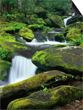 Stream Cascading Down Moss-Covered Rocks