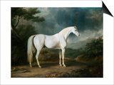White Horse in a Wooded Landscape