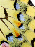 Wing of a Butterfly
