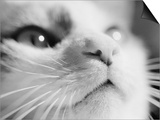 Close-up of Cat's Face