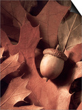 Autumn Acorns and Leaves
