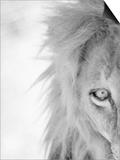 Half of Lion's Face