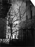 Bare Tree Below Buildings  Manhattan  1944