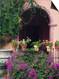 Bougainvillea and Geranium Pots on Wall in Courtyard  San Miguel De Allende  Mexico