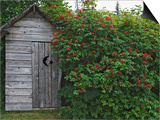 Outhouse Built in 1929 Surrounded by Blooming Elderberrys  Homer  Alaska  USA