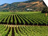Wine Country  Napa Valley  California