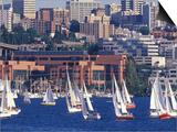 Sailboat Race on Lake Union  Seattle  Washington  USA