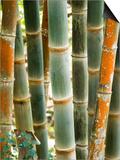 Bamboo  Doi Suthep  Thailand