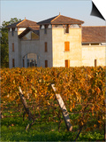Winery Building and Golden Vineyard in Late Afternoon  Domaine Des Verdots  Conne De Labarde