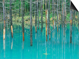 Shirogane Hot Springs  Blue Marsh  Hokkaido  Japan