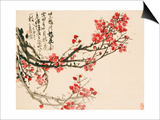Plum Blossoms
