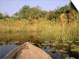 Mokoro through Reeds and Papyrus  Okavango Delta  Botswana