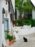 Street View with Black Cat  Manolates  Samos  Aegean Islands  Greece