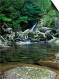 Shiratani Unsuikyo  Yakushima  Kagoshima  Japan