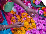 Woman Selling Flower  Pushkar  Rajasthan  India