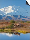 Mt Mckinley  Denali National Park  Alaska  USA