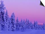 Sunset in the Lappish Winter  Finland