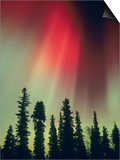 Aurora Borealis  Fairbanks Area  Alaska  USA