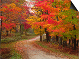 Vermont Country Road in Fall  USA