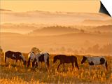 Paint Horses at Black Hills Wild Horse Sanctuary  South Dakota  Usa