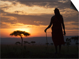 Maasai Tribesman Carrying a Stick on the Savannah at Sunset  Maasai Mara National Reserve  Kenya